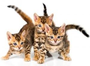 PHP Kitten