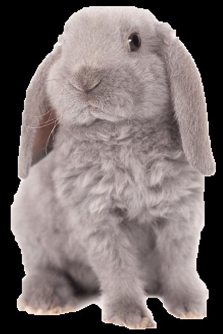 A fluffy grey bunny