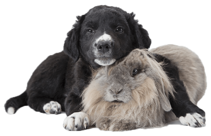 dog and rabbit 2