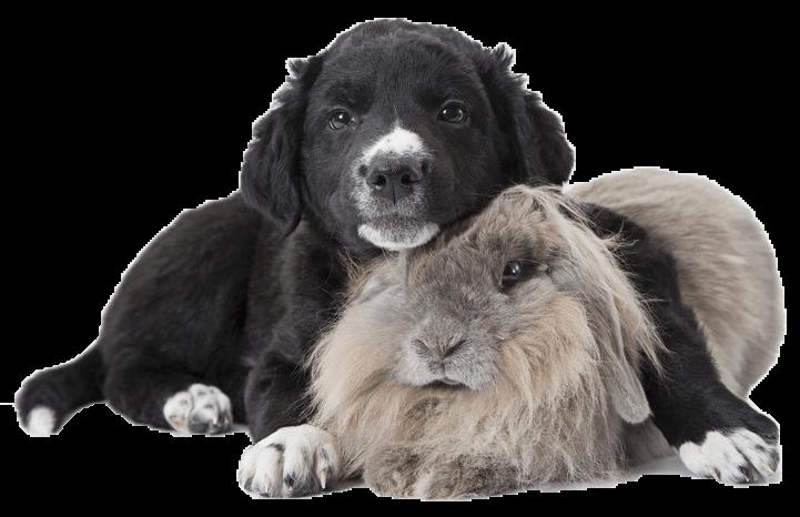 dog and rabbit 2