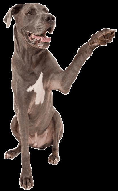 dog with paw 2