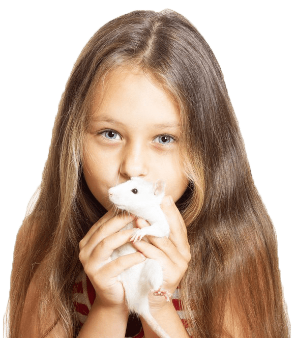 A little girl kissing a white rat